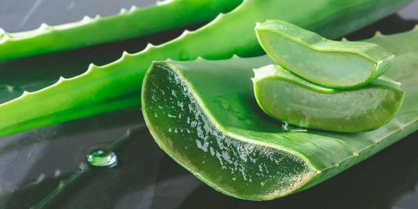Les nombreux bienfaits de l'aloe vera pour la santé